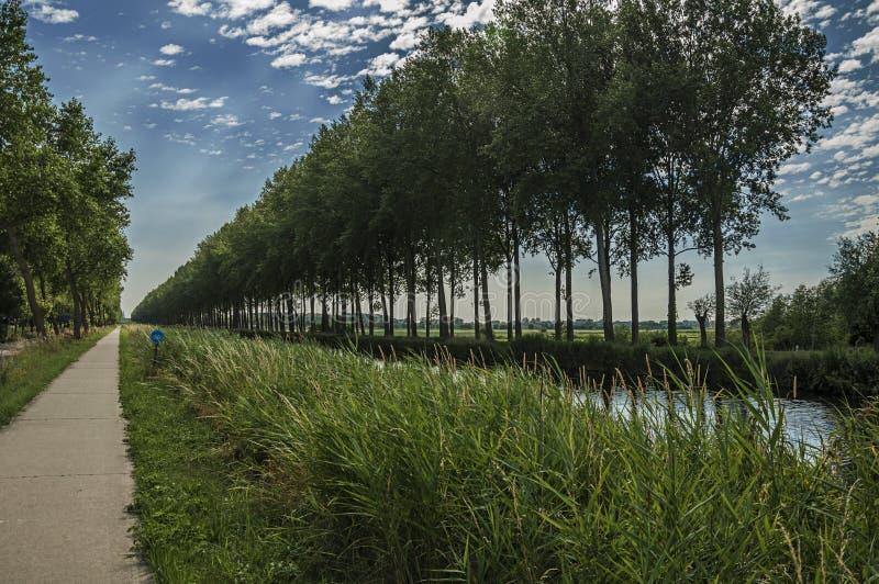 Väg och kanal med dungen och buskar längs den, i ljuset för sen eftermiddag och den blåa himlen, nära Damme royaltyfri bild
