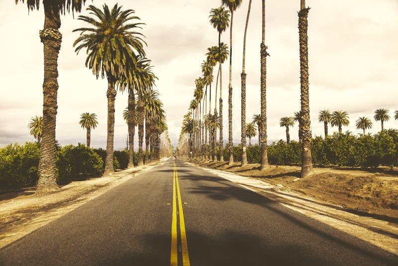 Väg och träd in i horisonten arkivfoton