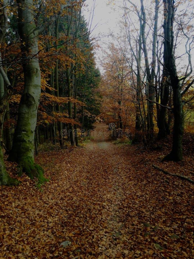 Väg på den mellersta skogen royaltyfri bild