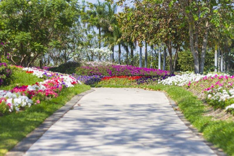 Väg som flankeras av vårblommor i en trädgård royaltyfri fotografi