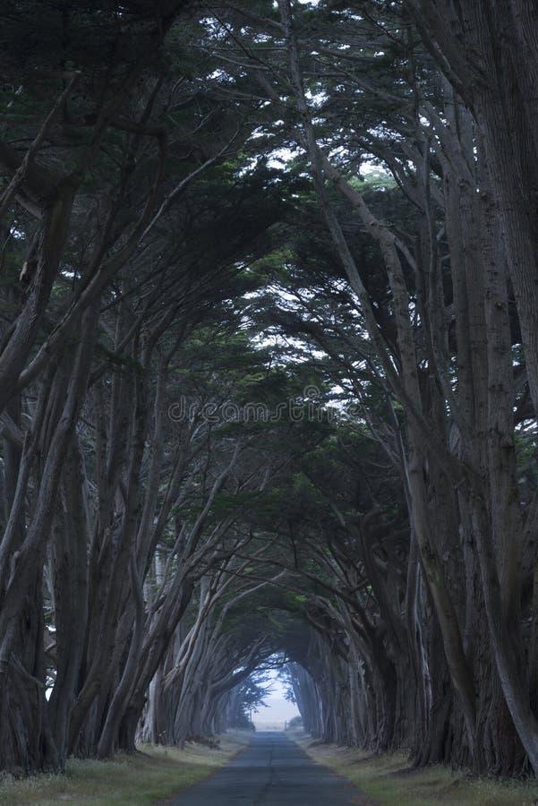 Väg som täckas av en markis av träd. royaltyfria foton