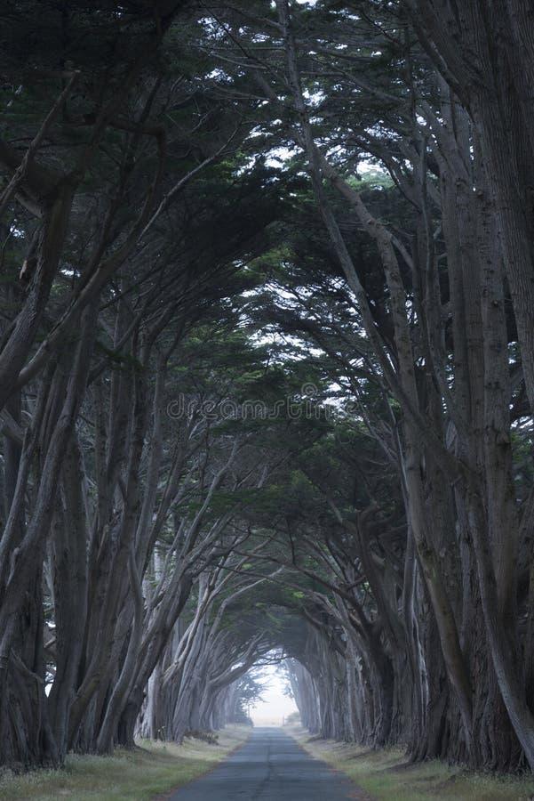 Väg som täckas av en markis av träd. arkivfoto