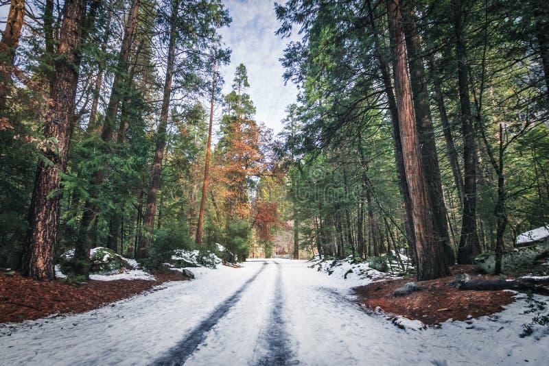 Väg som täckas med snö på vintern - Yosemite medborgare Parl, Kalifornien, USA arkivfoton