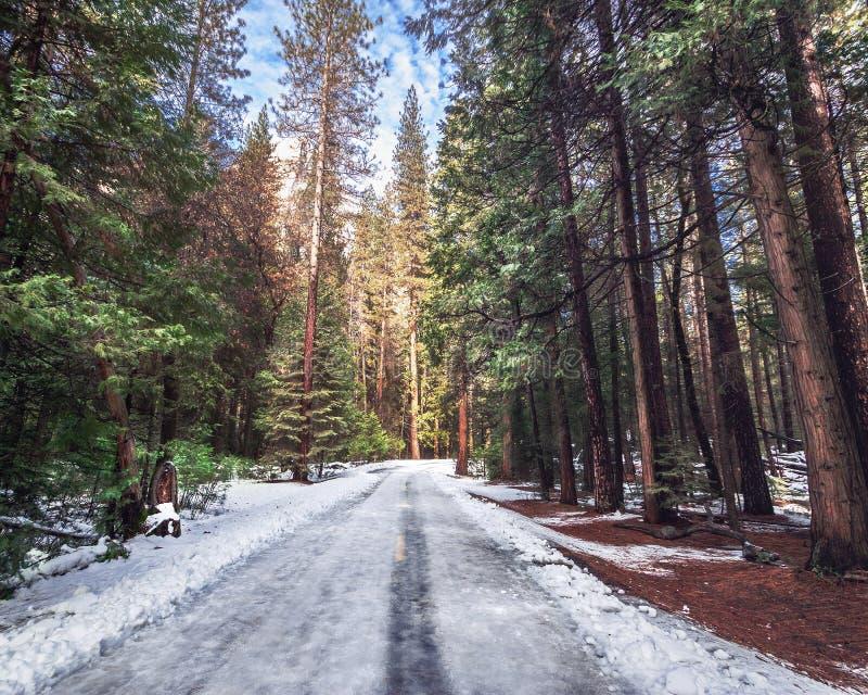 Väg som täckas med snö på vintern - Yosemite medborgare Parl, Kalifornien, USA royaltyfri fotografi