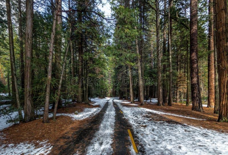 Väg som täckas med snö på vintern - Yosemite medborgare Parl, Kalifornien, USA royaltyfri foto