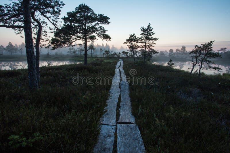 Väg till den estländska myren royaltyfri fotografi
