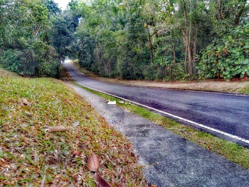 Väg till den gröna skogen royaltyfri foto