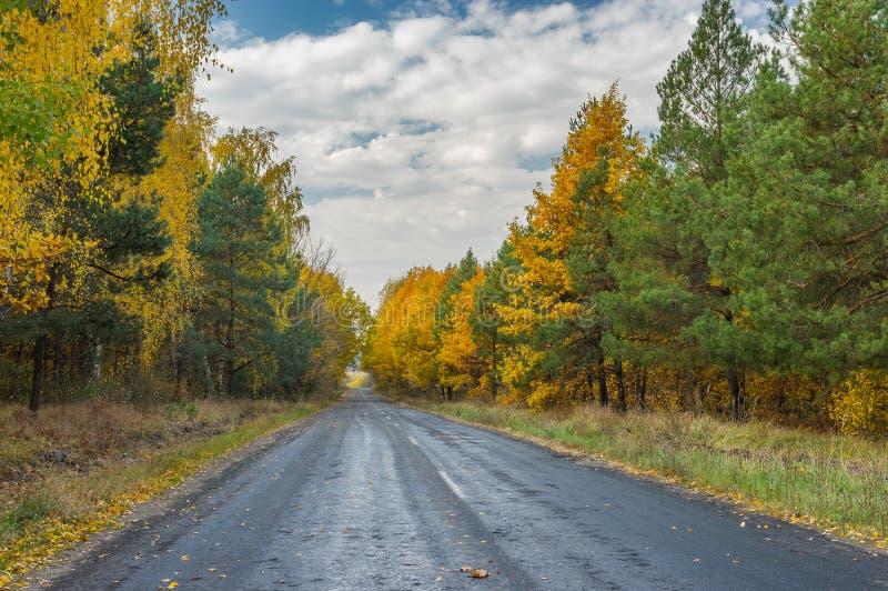 Väg till och med blandad skog på nedgångsäsongen royaltyfri bild
