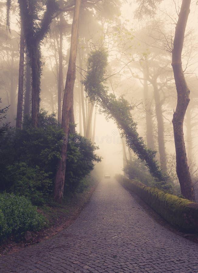 Väg till och med en guld- skog arkivbilder