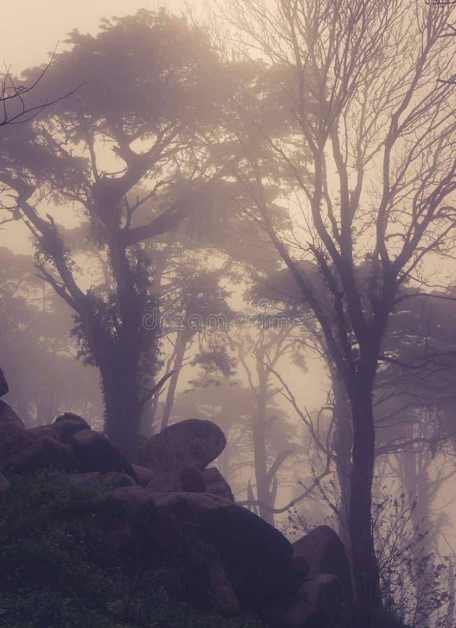 Väg till och med en guld- skog med dimma royaltyfri fotografi