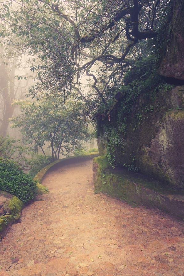 Väg till och med en guld- skog med dimma arkivfoto