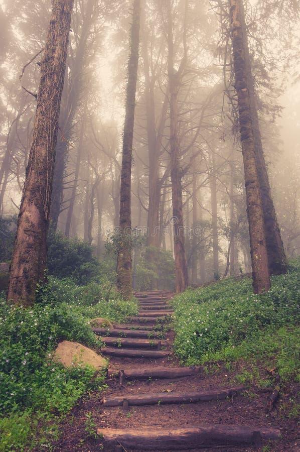 Väg till och med en guld- skog med dimma arkivbild