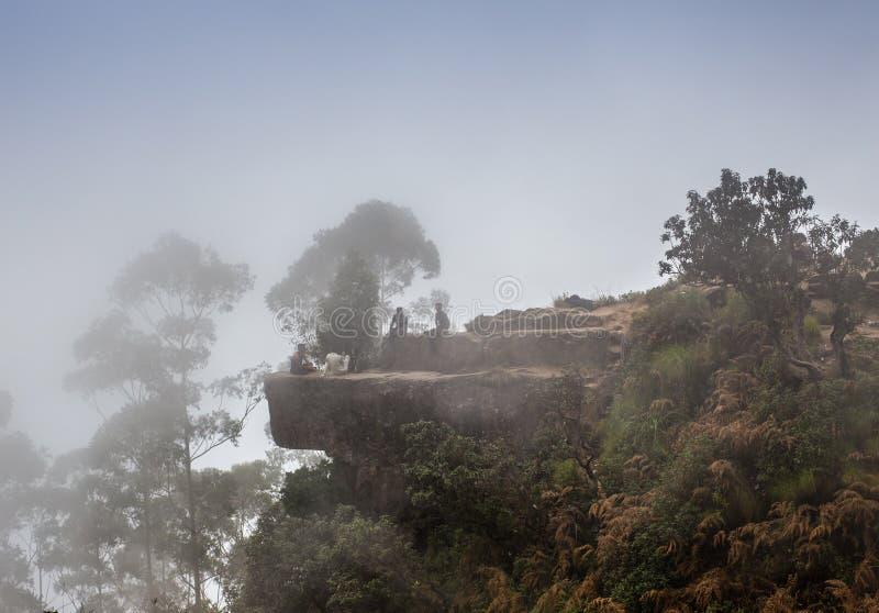 Väg till och med en guld- skog med dimma royaltyfria bilder
