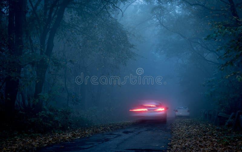 Väg till och med en mörk skog på natten royaltyfri bild