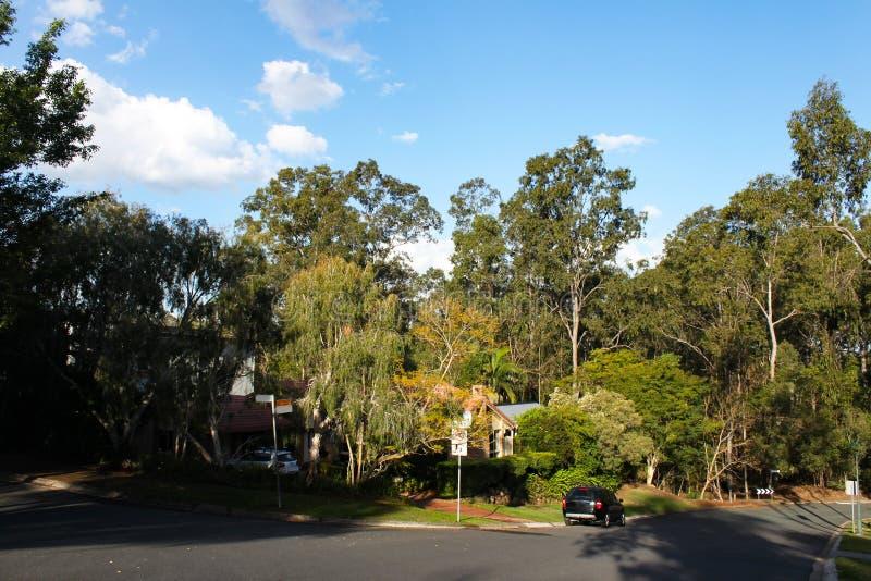 Väg till och med förorts- grannskap nära Brisbane Queensland Australien med högväxta eukalyptusträd och hus som kikar till och me arkivfoto