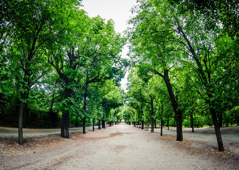 Väg till och med rad av gröna trees royaltyfria bilder