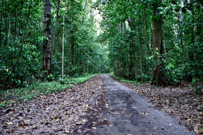 Väg till och med skogen en bana i skogen royaltyfri fotografi