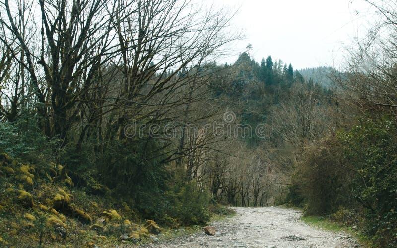 Väg till och med skogen på stenig ritt royaltyfria foton