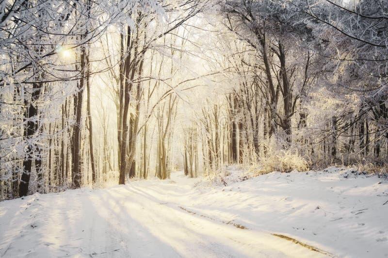 Väg till och med vinterskog på soluppgång royaltyfri fotografi