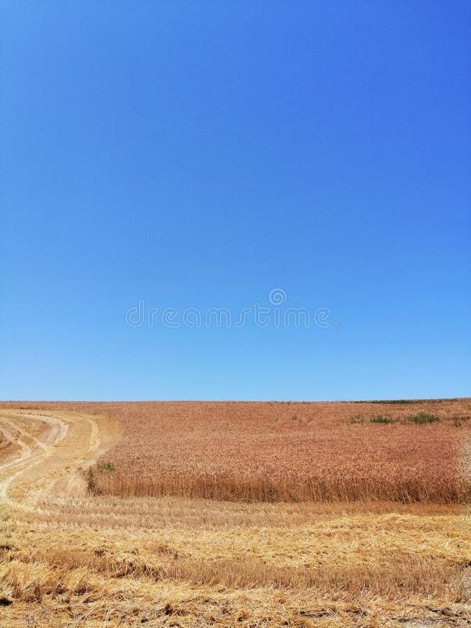Väg till vetefältet och himmel arkivbilder
