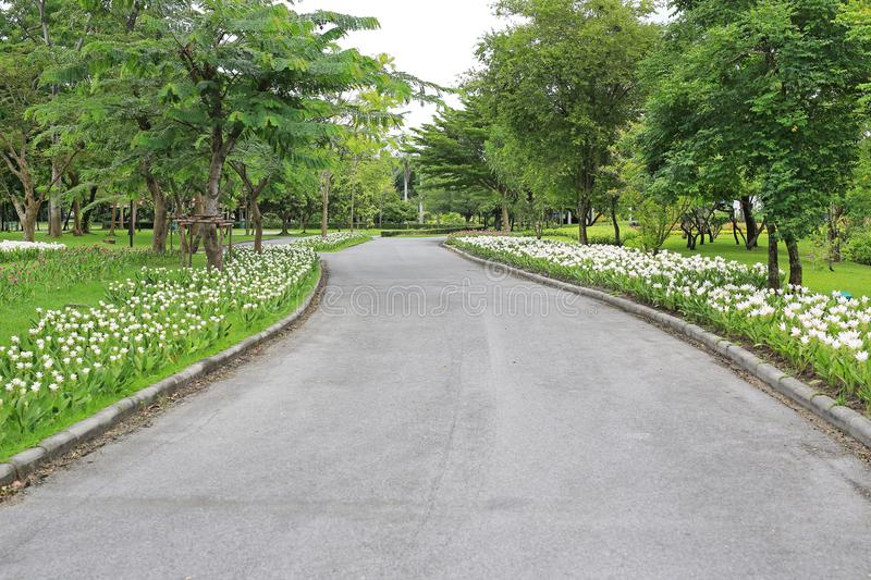Vägbanapasserandet till och med blomman och trädet på parkerar trädgården i den förnyade morgonkänslan arkivbilder