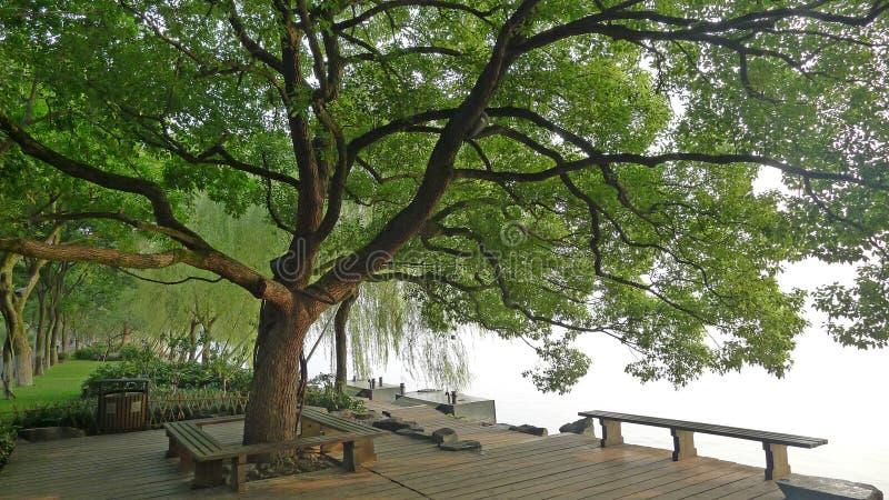 Vägbank för västra sjö, Su med kamferträdet fotografering för bildbyråer