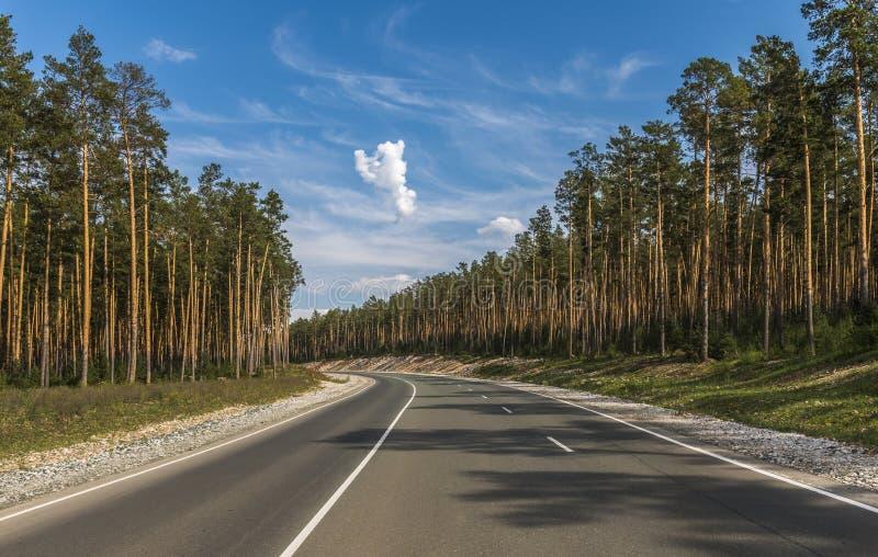 Vägbortgången till och med pinjeskogen royaltyfria foton