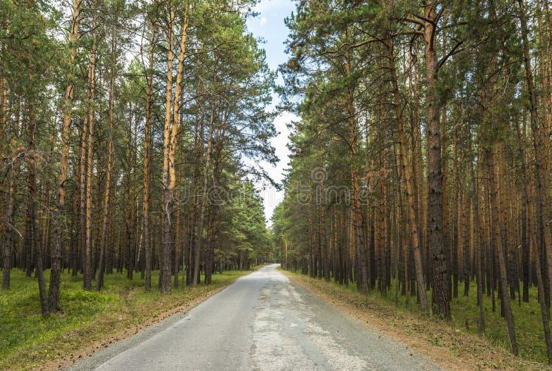 Vägbortgången till och med pinjeskogen arkivbild