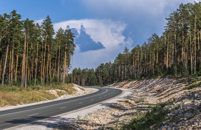 Vägbortgången till och med pinjeskogen arkivfoton