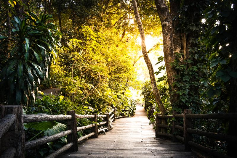 Vägen att gå i trädgården royaltyfri fotografi
