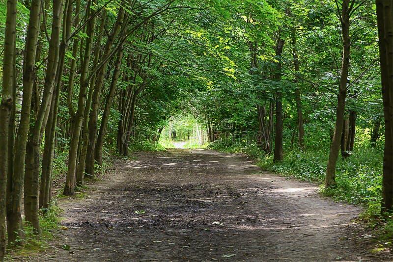 Vägen för trädsolskentunnelen går i en tyst sommardag arkivfoton