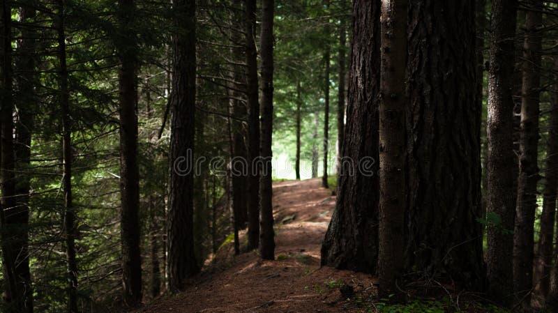 Vägen i den fredliga skogen arkivfoton