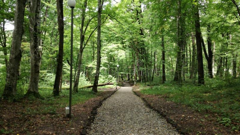 Vägen i ett naturligt parkerar royaltyfria foton