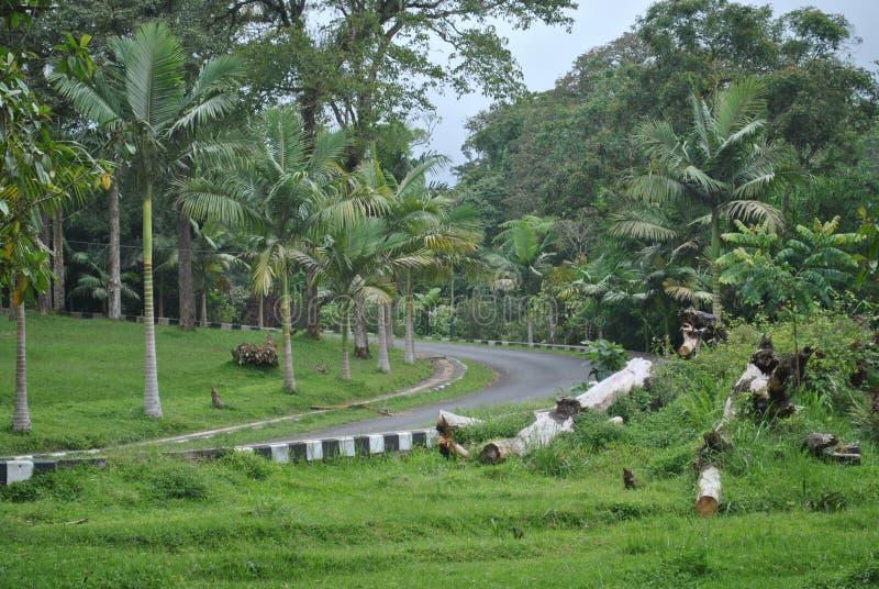 Vägen i området av den Bedugul Bali botaniska trädgården royaltyfria foton