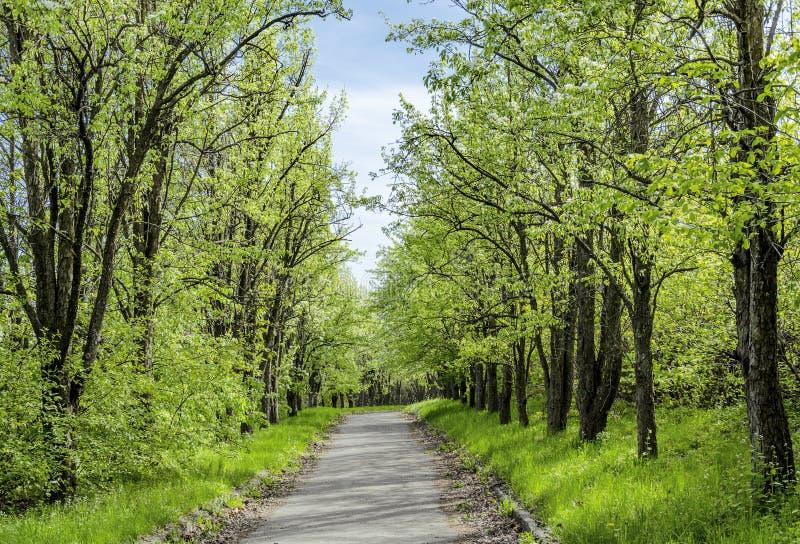 Vägen i parkerar med träd och grönt gräs arkivfoto