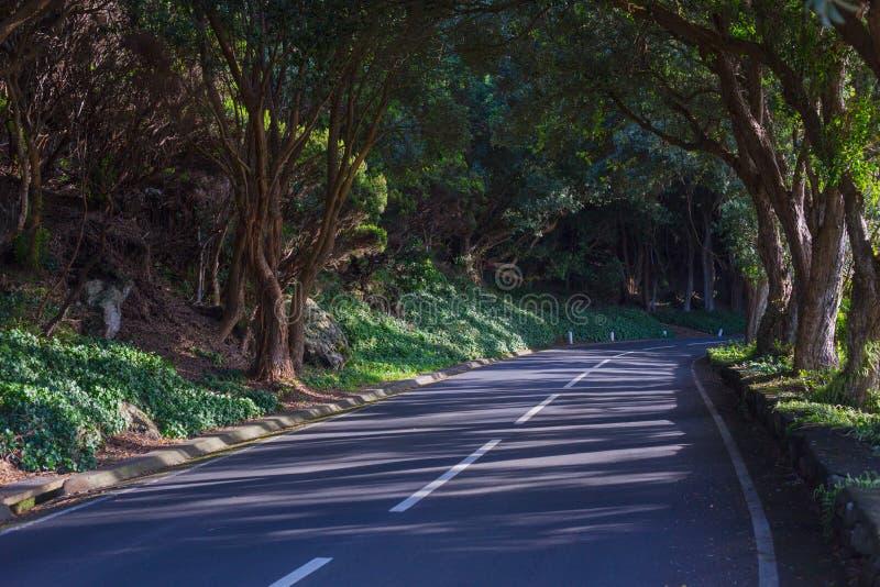 Vägen i skogen nära Vigia das Baleias Terceira, Azorerna Portugal royaltyfri fotografi