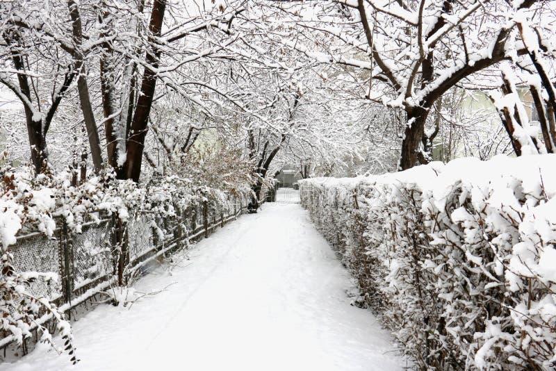 Vägen i täckt snö parkerar royaltyfria bilder