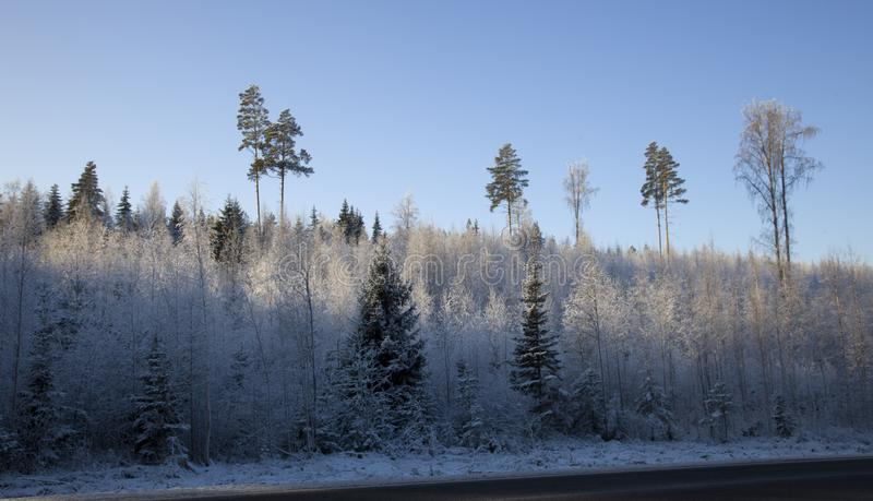 Vägen i vinterträt på den frostiga soliga dagen royaltyfri bild