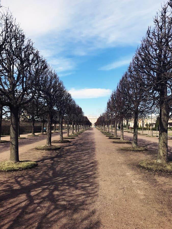 Vägen mellan träd royaltyfria foton
