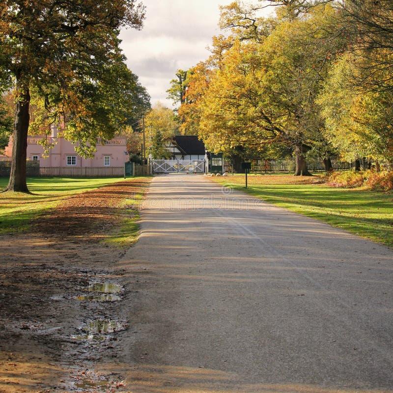 Vägen parkerar igenom land med höst och faller träd som leder till a arkivfoton