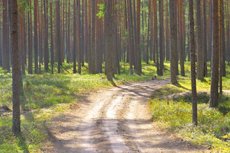 Vägen sörjer in trädskogen royaltyfri bild