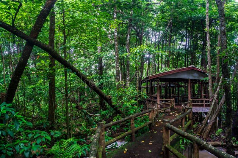 vägen till den Nang Khwan vattenfallet, grundar Phra Tak, Thailand arkivfoto