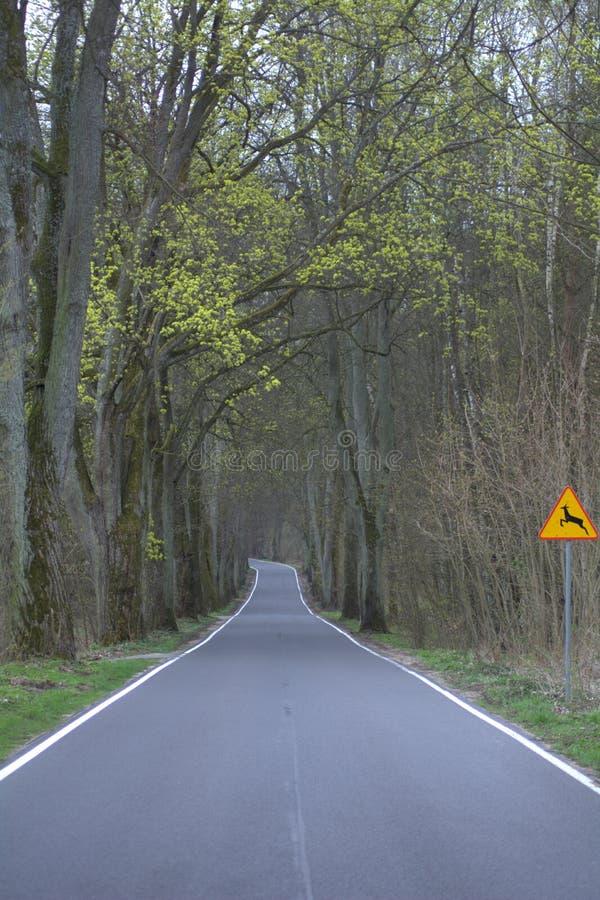 Vägen till sjön royaltyfria foton