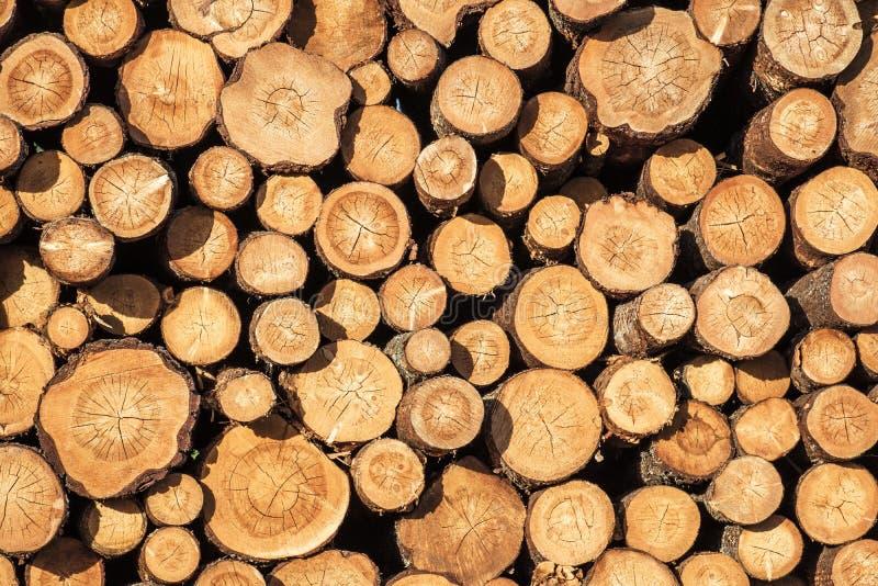 Vägg av staplade wood journaler royaltyfri bild
