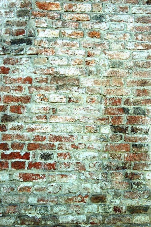vägg för 6 tegelsten royaltyfria foton