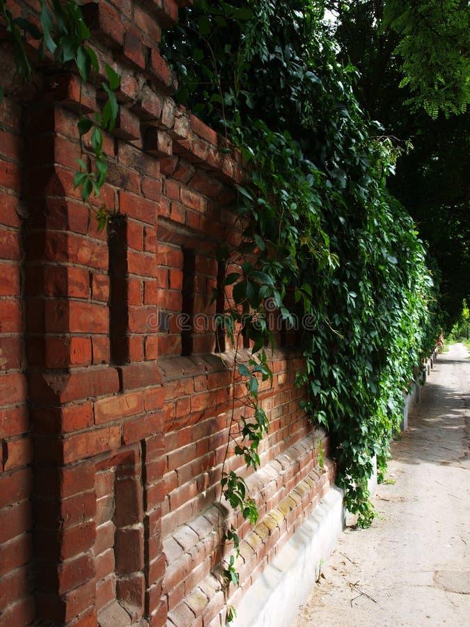 vägg för sten för tegelstenmurgröna gammal arkivbild