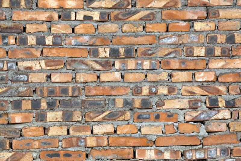 vägg för textur för bakgrundsväxt liten royaltyfri foto