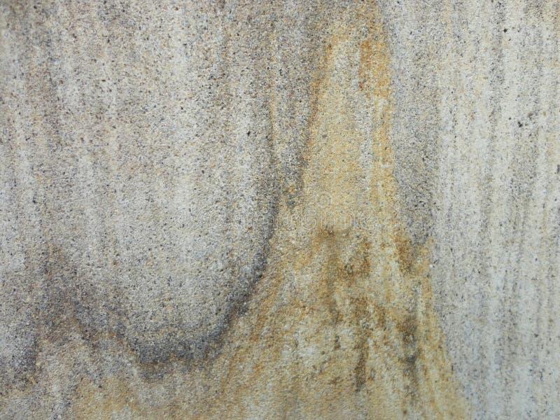 vägg för textur för bakgrundsväxt liten arkivbilder