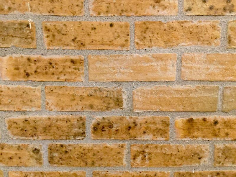 vägg för trädgård för framdel för tegelstenbrownblomma Bakgrund royaltyfri foto