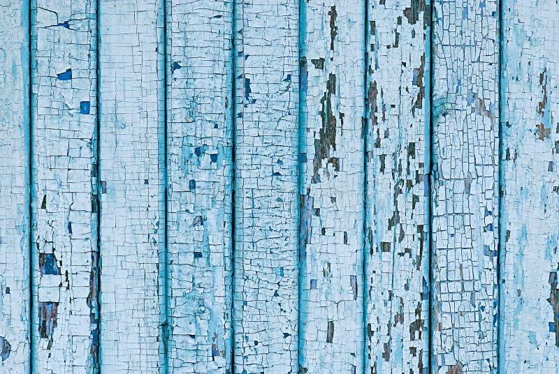 Vägg från träplankor med blåttmålarfärg Sprucken målarfärg på ett trä arkivfoto